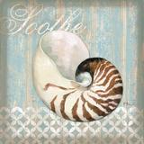 Spa Shells III Print by Paul Brent