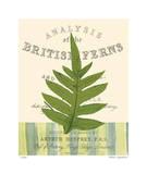 British Fern I Giclee Print by Paula Scaletta