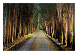 Tree Tunnel Posters by Michael Cahill