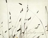 Grass Balance Kunst af Amy Melious