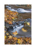 Sweet Creek Falls III Limited Edition by Donald Paulson