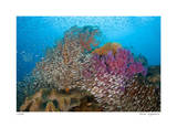 Soft Corals and Glassfish Giclee-trykk av  Jones-Shimlock