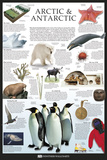 Artic & Antarctic Prints