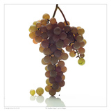 NY Seedless Grapes Print by David Wagner