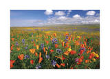 Flowers to the Horizon II Giclee Print by Donald Paulson