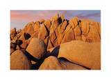 Joshua Tree Sunset II Giclee Print by Donald Paulson