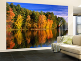 Autumn Trees in New Hampshire, New Hampshire, USA Wall Mural – Large by Carol Polich