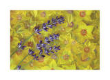 Lavendar and Yellow Loosestrife Blossoms Limited Edition by Donald Paulson