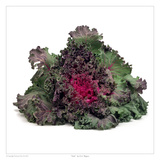 Kale Prints by David Wagner