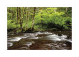 Forest Stream III Giclee Print by Donald Paulson