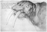 Albrecht Durer (Head of a walrus) Plakat
