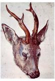 Albrecht Durer (Head of a deer) Prints