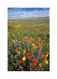 Flowers to the Horizon I Giclee Print by Donald Paulson