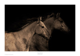 Young Mustangs Prints by Robert Dawson