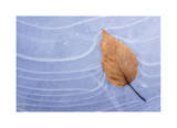 Leaf Frozen in Ice Limited Edition by Donald Paulson