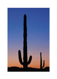 Arizona Moon & Cactus Limited Edition by Donald Paulson