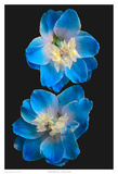 Candle Delphinium Print by Richard Reynolds