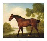 Truss, A Hunter Premium Giclee Print by George Stubbs