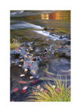 Rogue River Leaves in Motion Limited Edition by Donald Paulson