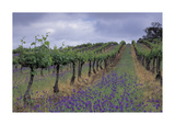 Wendouree Cellars Vineyard Premium Giclee Print by Mick Rock