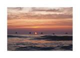 Pelican Sunrise Giclee Print by Matthew Lusk