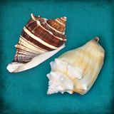 Two Shells III Art by Diana Brennan