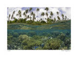 Reef Scenic Split Image Giclee Print by  Jones-Shimlock