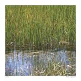 River Reeds II Giclee Print by Joy Doherty