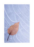 Frozen Leaf in Ice Limited Edition by Donald Paulson