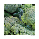Broccoli Giclee Print by Stacy Bass