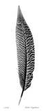 Feather III Reproduction procédé giclée par Anthony Tahlier