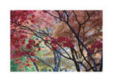 Lithia Park Fall Color II Limited Edition by Donald Paulson