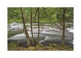 Clackamas River I Giclee Print by Donald Paulson