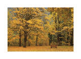 Park Bench in Fall Giclee Print by Donald Paulson