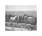 Officers' Horses Watering Near Berneville Premium Giclee Print by Sir Alfred Munnings