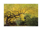 Lithia Park Arching Maple Limited Edition by Donald Paulson
