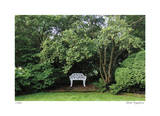 Bench and Tree Giclee Print by Stacy Bass