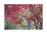 Lithia Park Fall Color I Limited Edition by Donald Paulson
