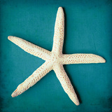 Sea Star II Posters by Diana Brennan