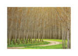 Poplar Trees and Road Limited Edition by Donald Paulson