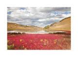 Lac Du Bois Grasslands Park I Limited Edition by Donald Paulson