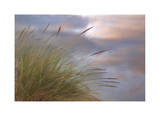 Dune Grasses and Pond Limited Edition by Donald Paulson