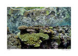 Reef Crest Reflection Giclee-trykk av  Jones-Shimlock