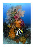 Reef Scenic 7 Giclee Print by  Jones-Shimlock