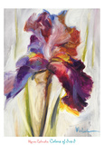 Colors of Iris I Art by Maria Zielinksa