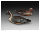Stevens Pintail Pair Print by Robert Shaw