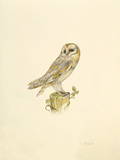 Barn Owl Premium Giclee Print by C.T.N. Ackland