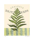 British Fern II Limited Edition by Paula Scaletta