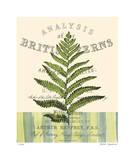 British Fern II Giclee Print by Paula Scaletta