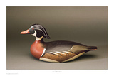 Lincoln Wood Duck Art by Robert Shaw